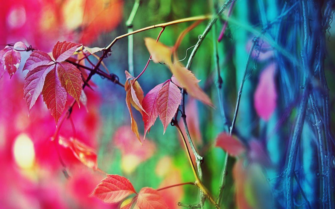 multicolor leaves macro wallpaper