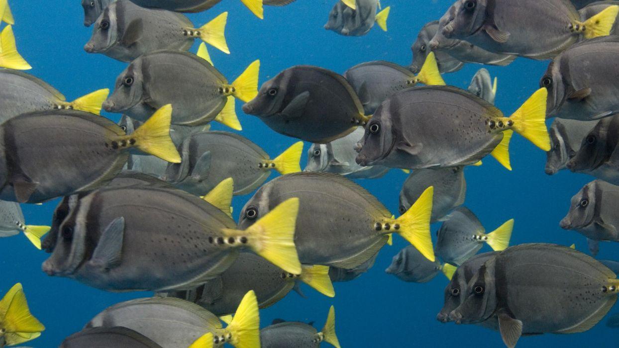 yellow school islands Ecuador wallpaper