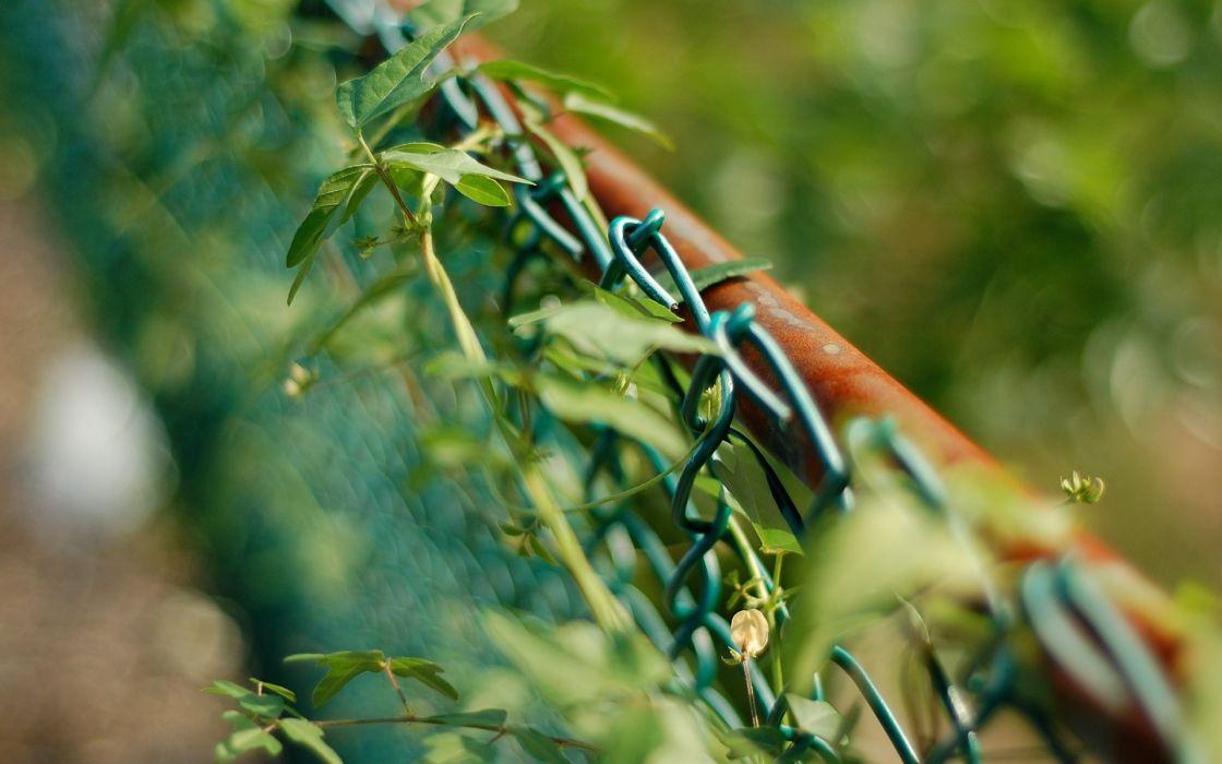 fences leaves macro depth of field wallpaper
