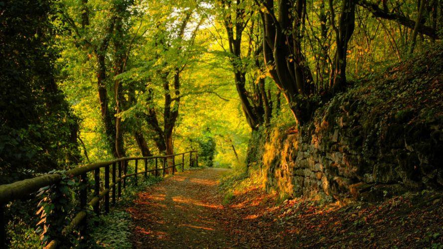 landscapes trees forests roads wallpaper