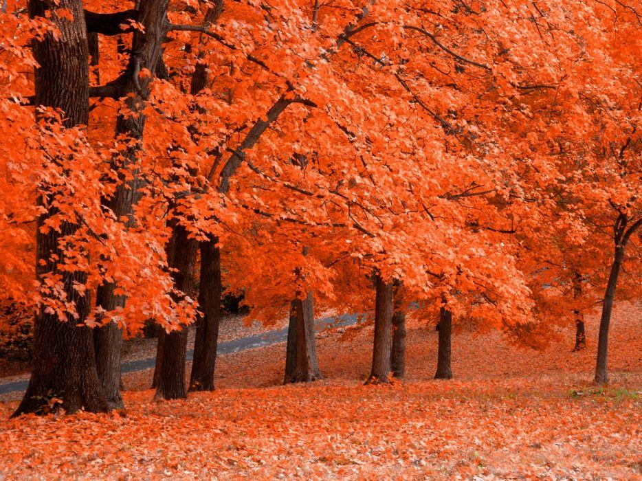 trees autumn wallpaper