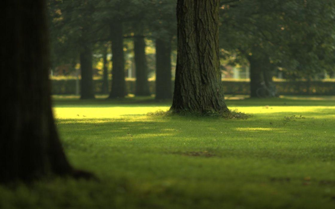 green landscapes parks wallpaper