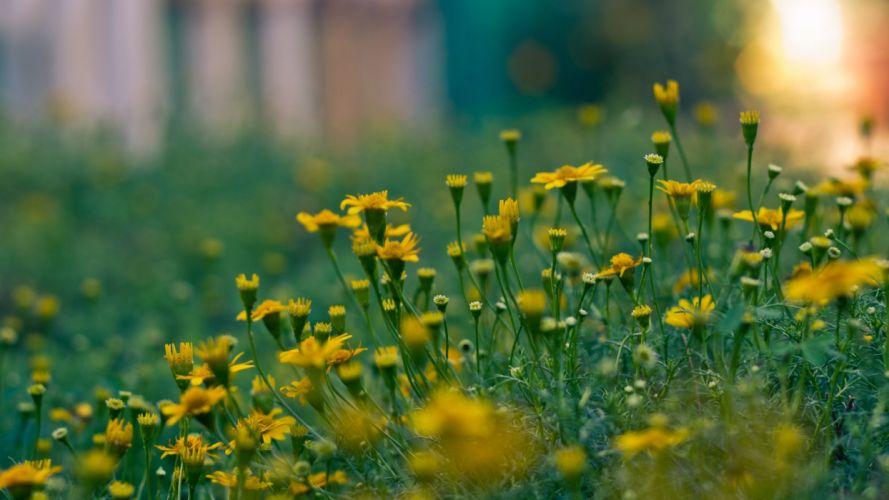 landscapes flowers grass wallpaper