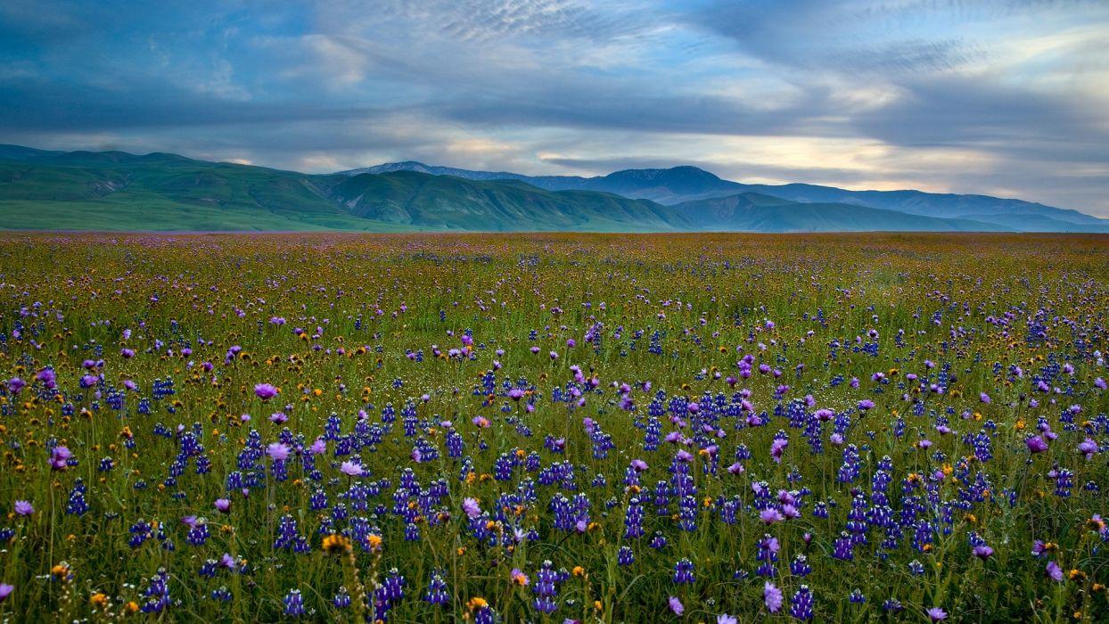 mountains landscapes fields meadows California blue flowers wildflowers wallpaper