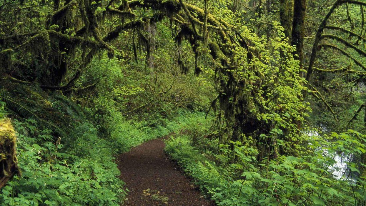 woods silver falls trail Oregon wallpaper