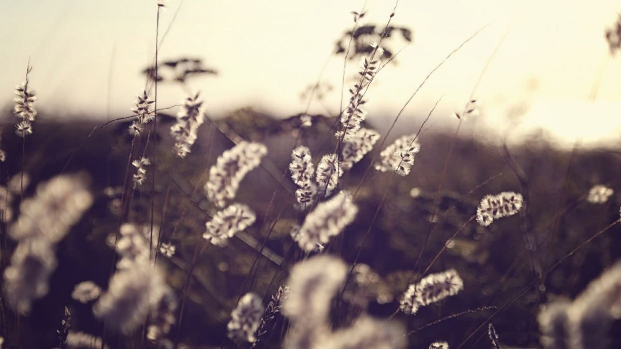 nature flowers grass plants sepia countryside wallpaper