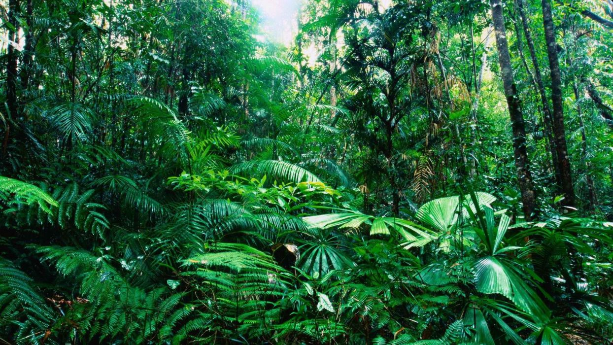 tropical Australia rainforest wallpaper