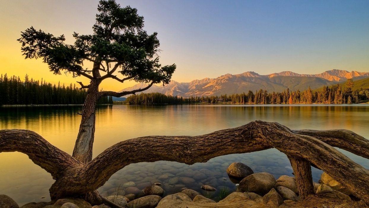 trees lakes wallpaper