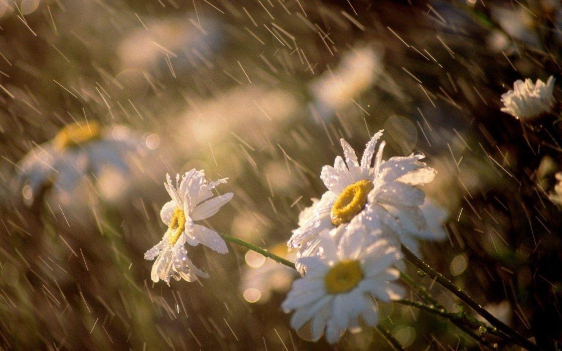 Rain Flowers Wallpaper 1680x1050 216920 Wallpaperup