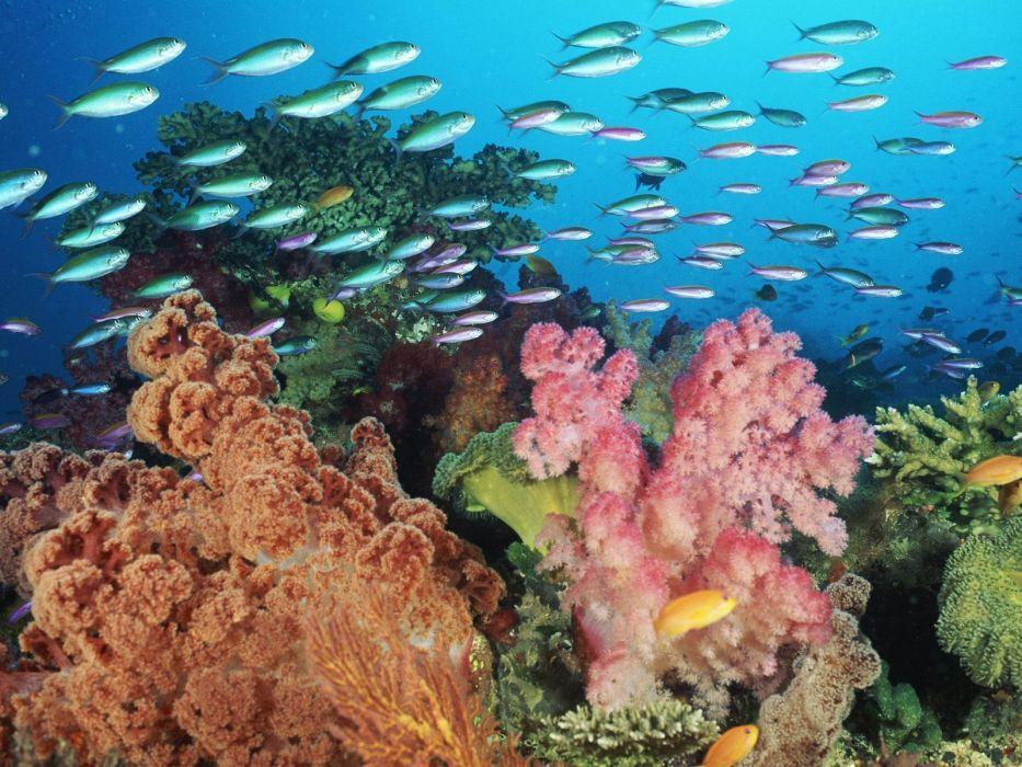 nature coral wallpaper