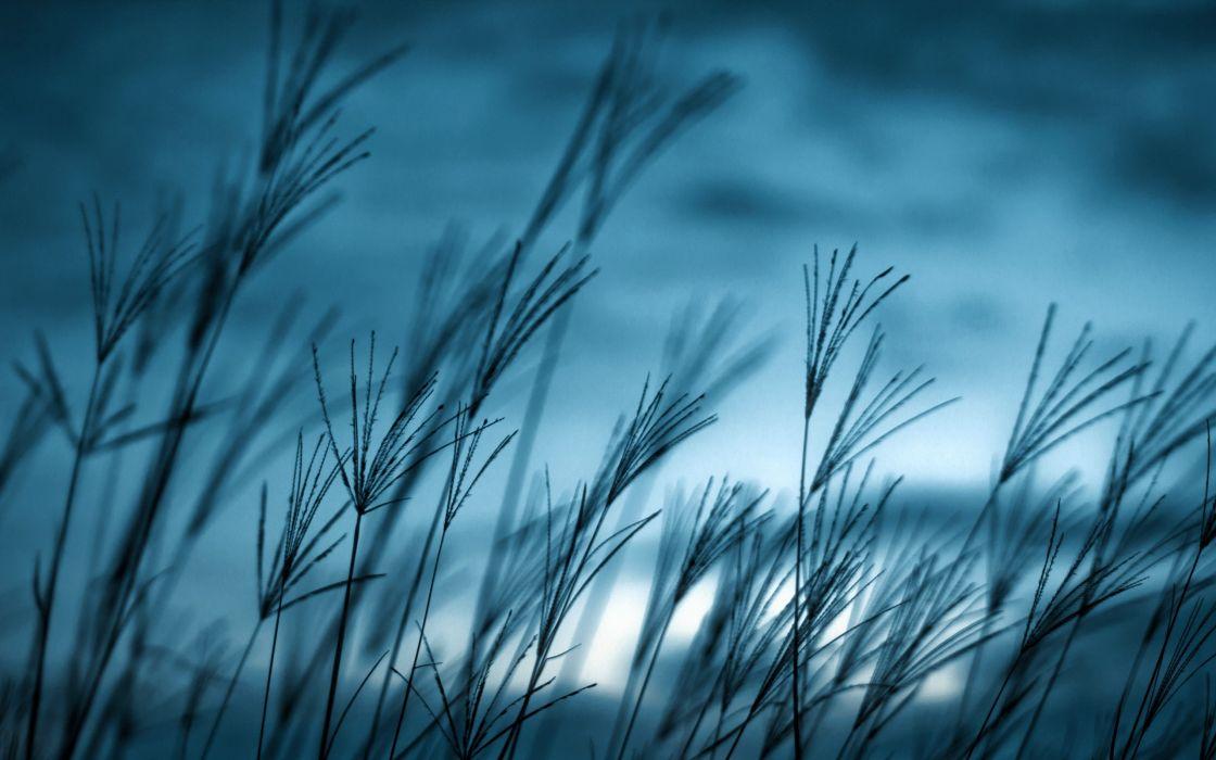 grass macro wallpaper
