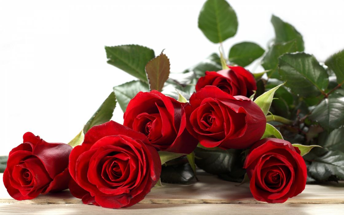 roses buds red wallpaper