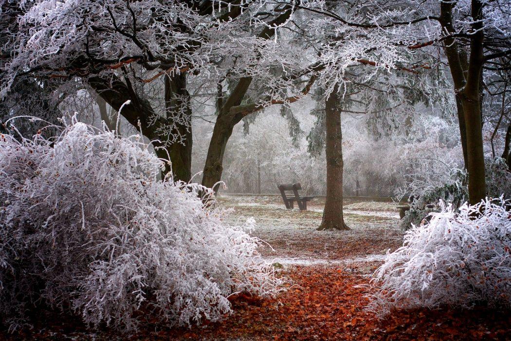 branches park frost winter trees shrubs autumn wallpaper