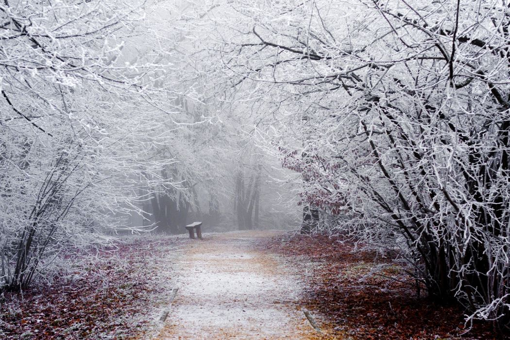 branches snow nature winter frost wallpaper