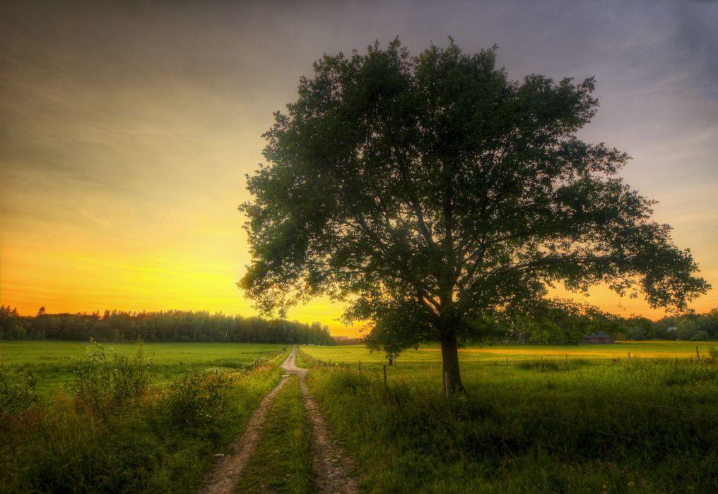 morning grove tree house road field wallpaper