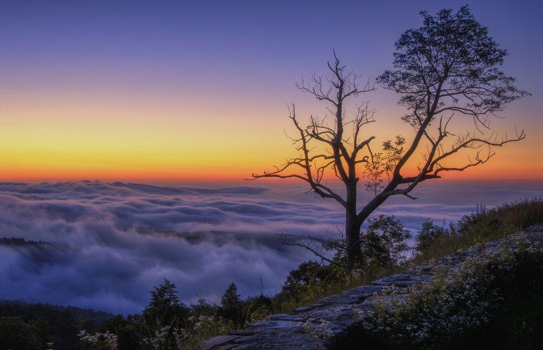 mountain tree clouds morning peak wallpaper