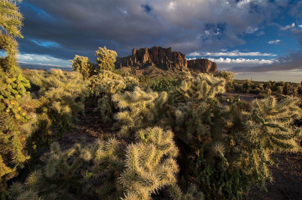 mountains cactus sky nature wallpaper