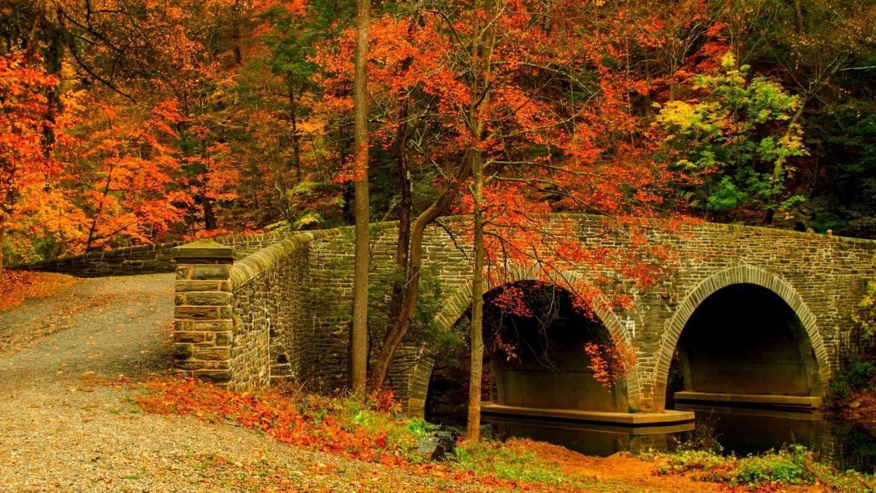 nature road leaves trees forest park bridge colorful path autumn wallpaper