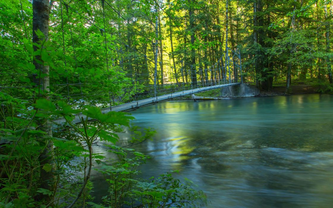 river forest trees bridge nature wallpaper