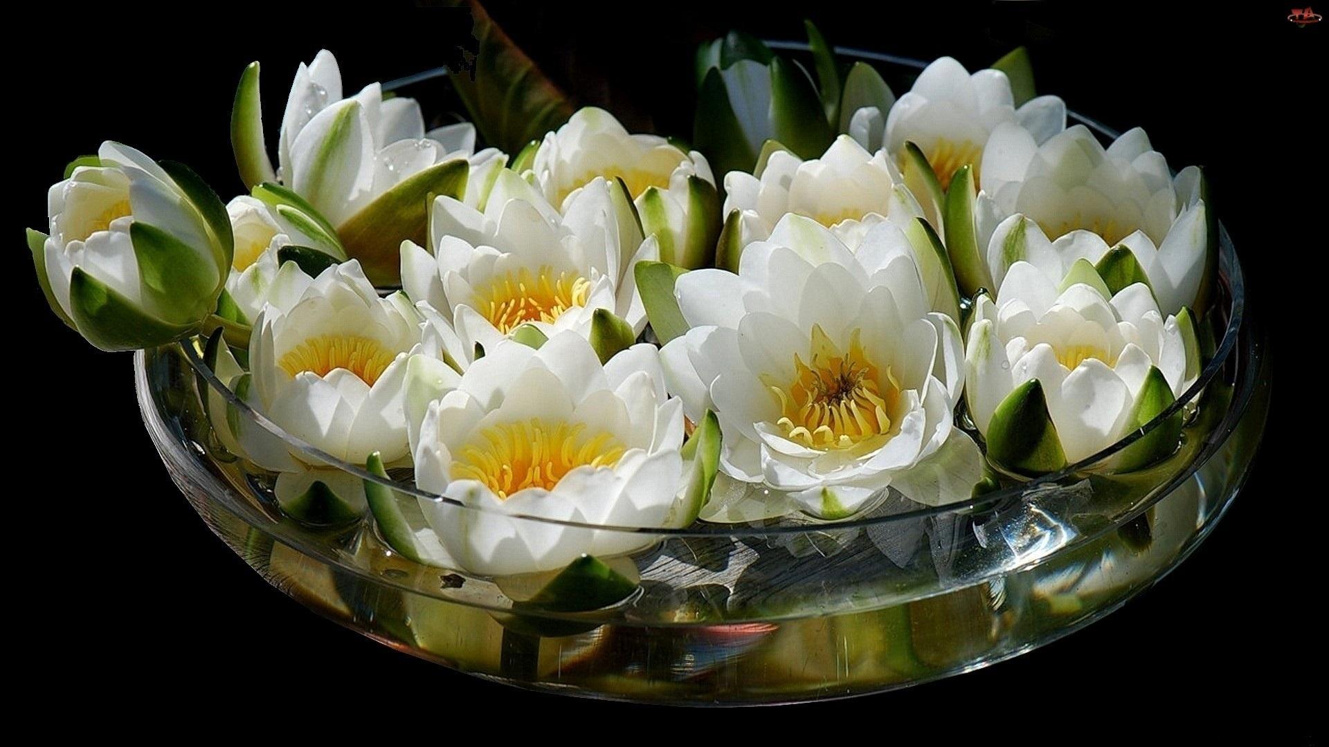 Lotus Vase Bouquet Wallpaper 1920x1080 217215 Wallpaperup
