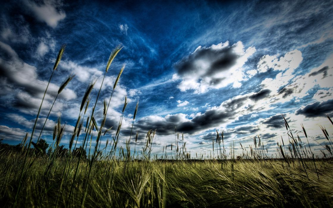 landscapes grass HDR photography wallpaper