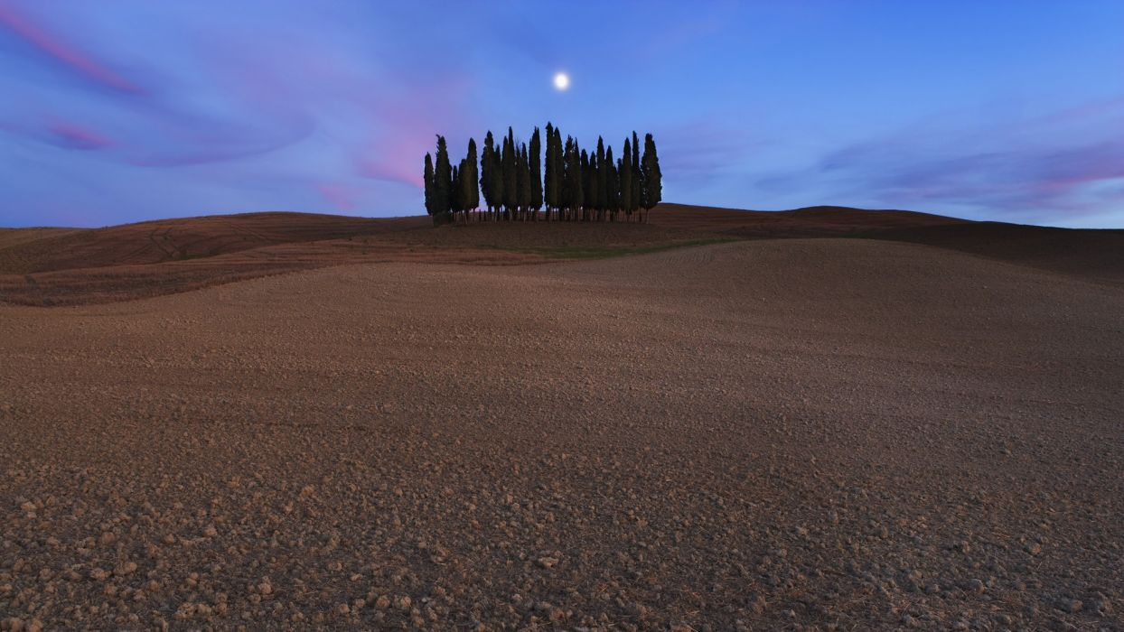 landscapes trees Italy Siena cypress Cipressi San Quirico d'Orcia wallpaper