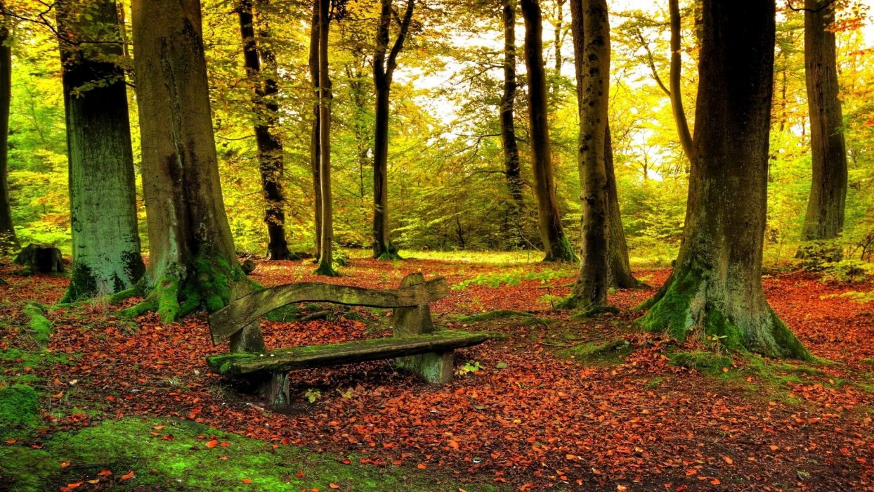 landscapes nature trees forests wallpaper