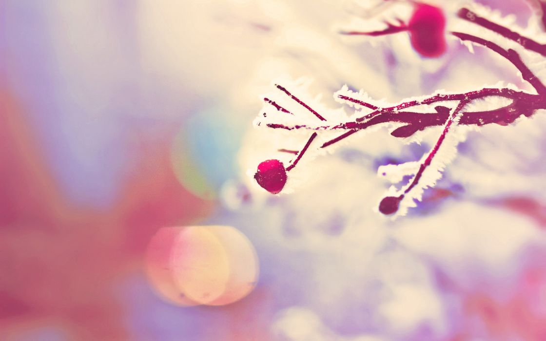 nature trees bokeh branches hoarfrost wallpaper