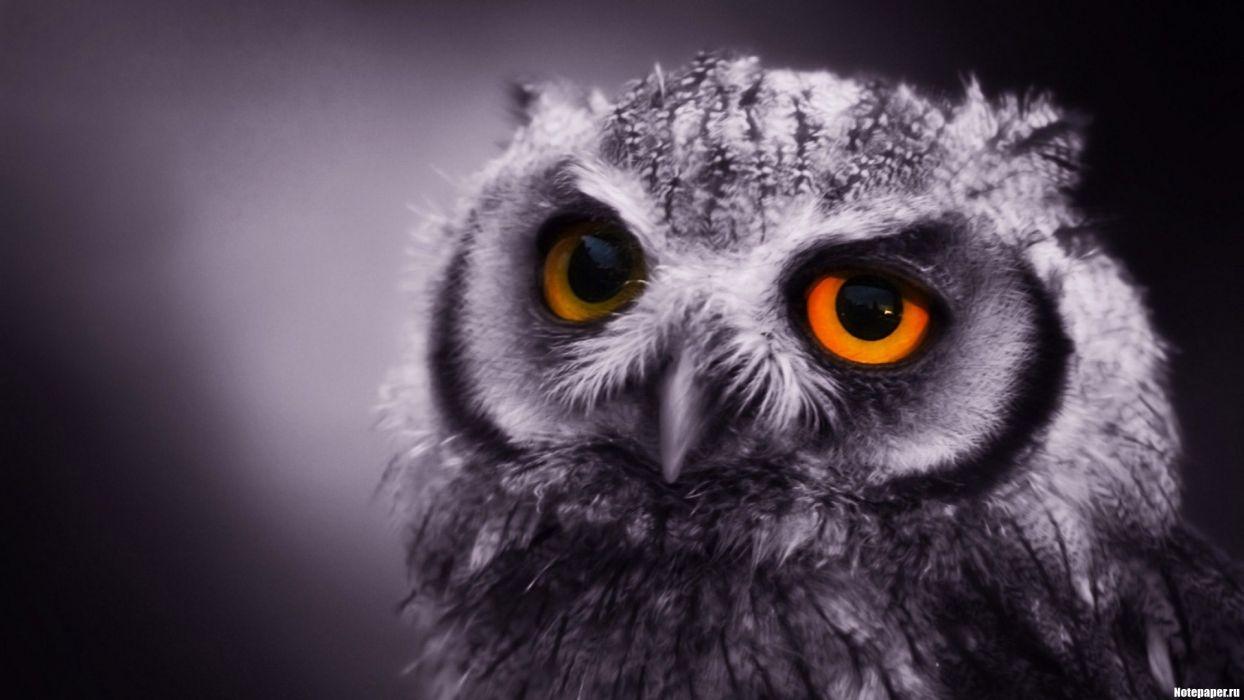 close-up birds owls monochrome wallpaper