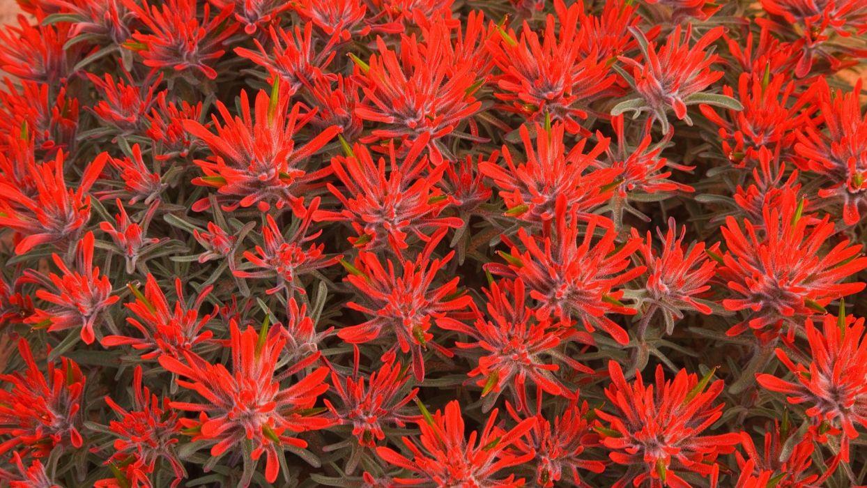 flowers Utah red flowers wallpaper