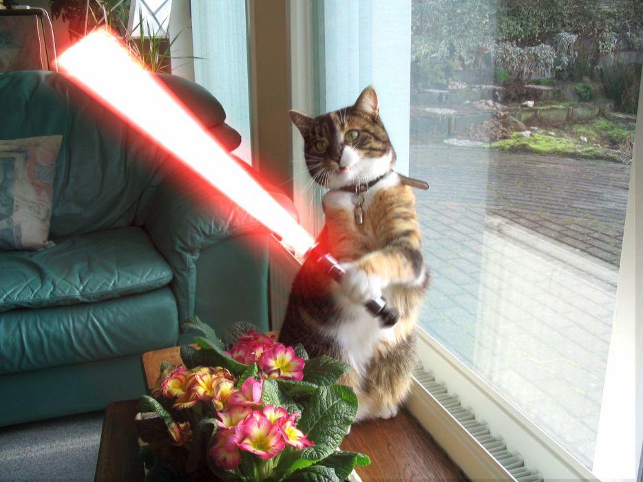 cats animals lightsabers wallpaper