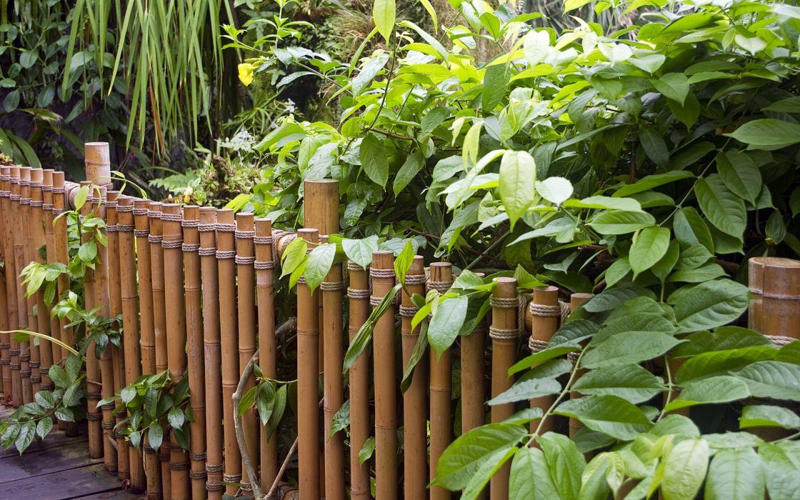 nature bamboo bridges plants wallpaper