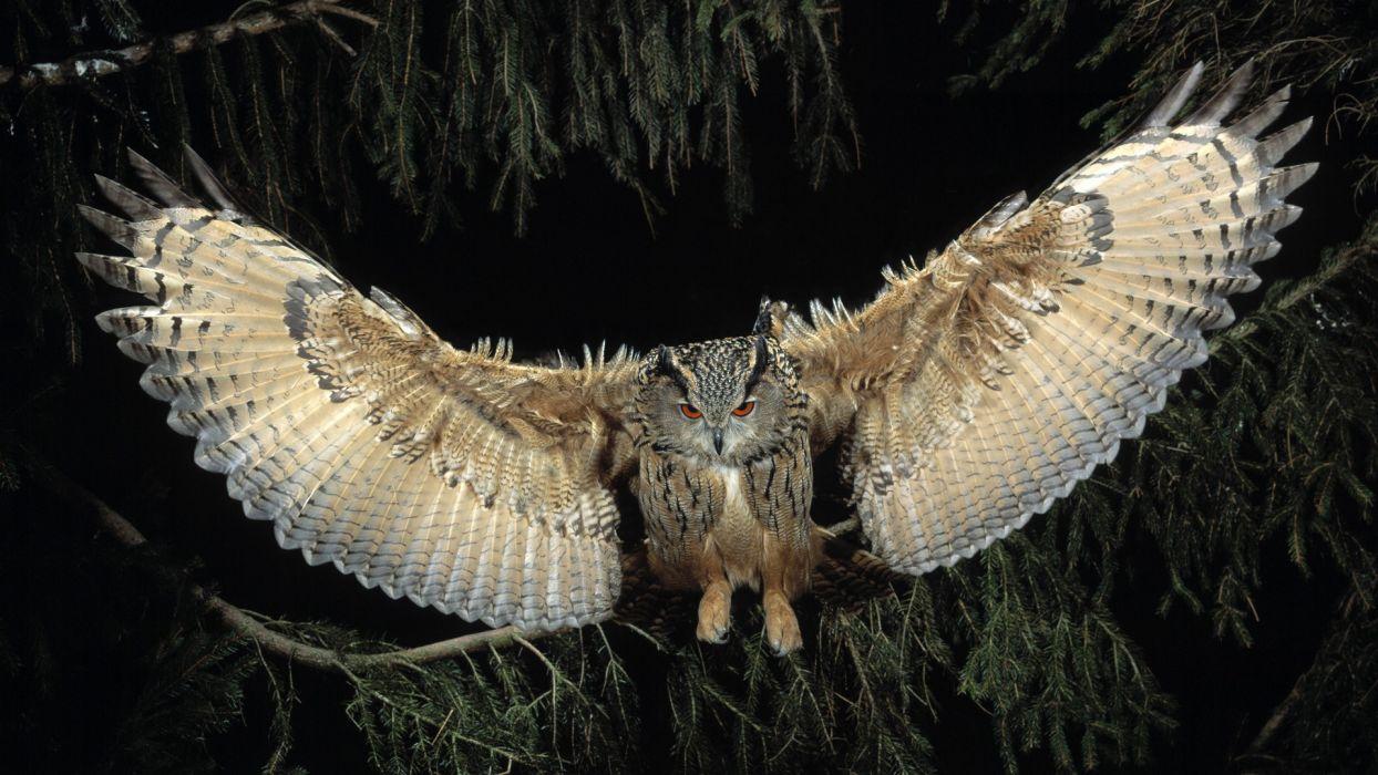 eagles owls European flight wallpaper