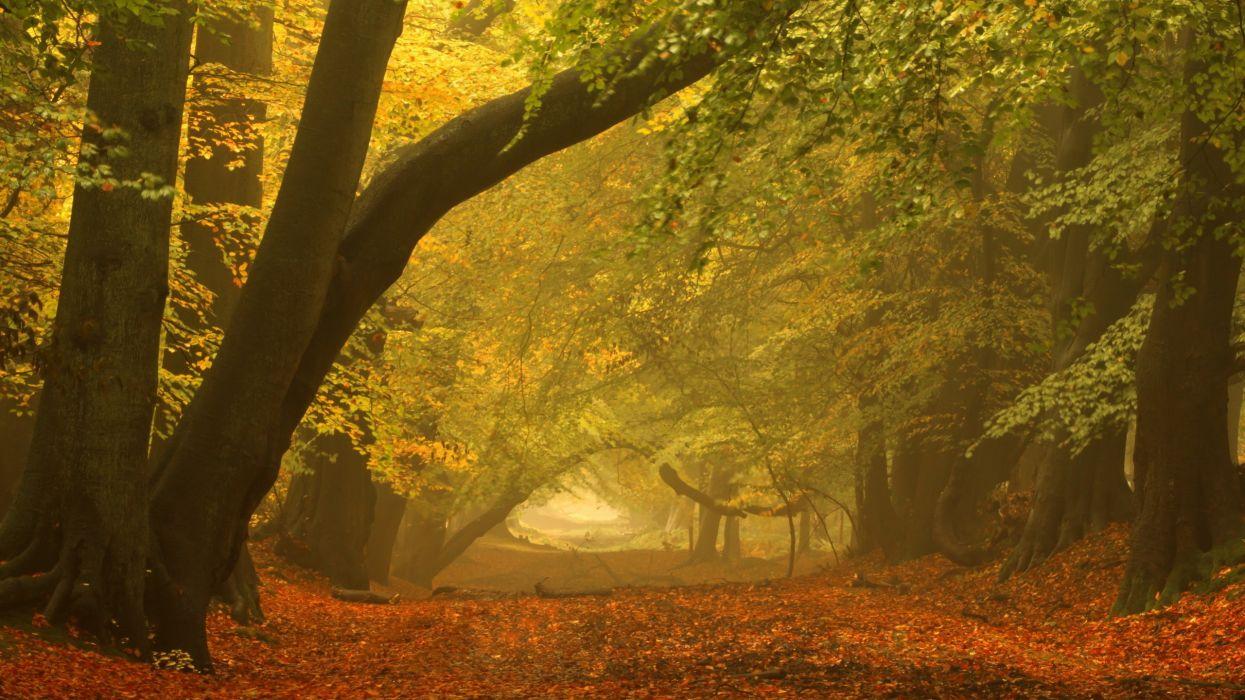 trees paths wallpaper