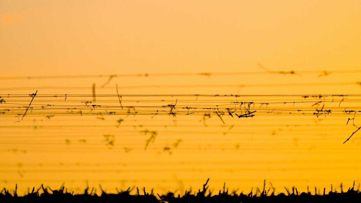 sunset landscapes silhouettes vineyard wallpaper
