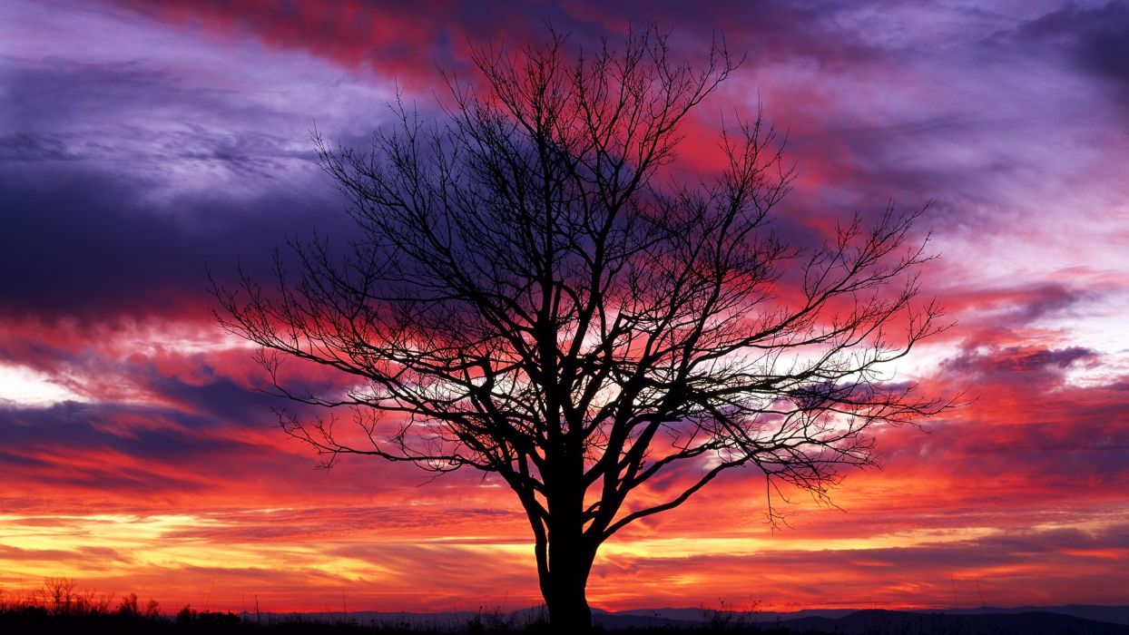 sunset trees red silhouettes National Park shenandoah wallpaper