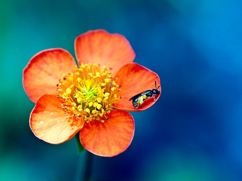 nature flowers insects macro orange flowers wallpaper