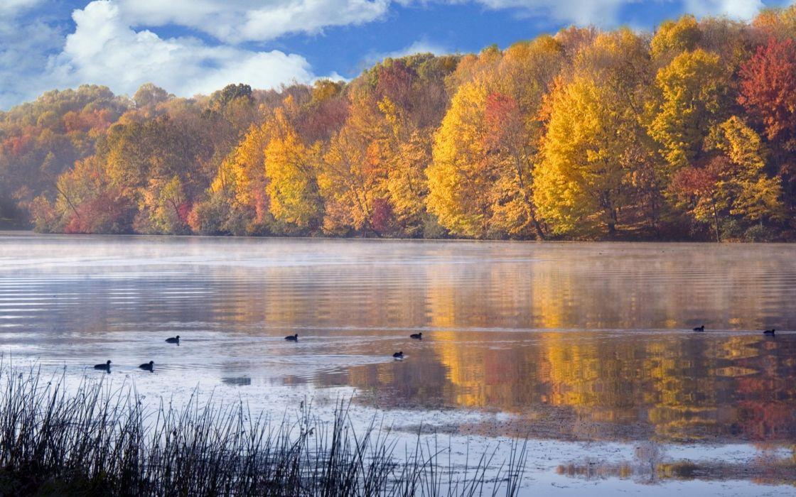 landscapes nature ducks lakes wallpaper