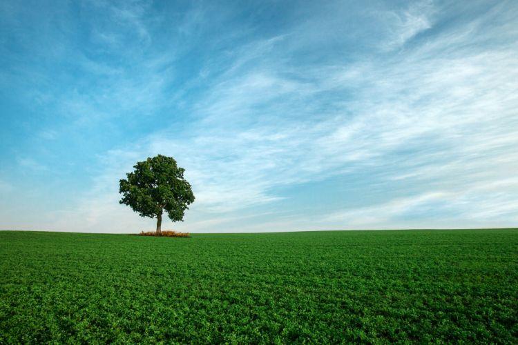 field sky tree landscape wallpaper
