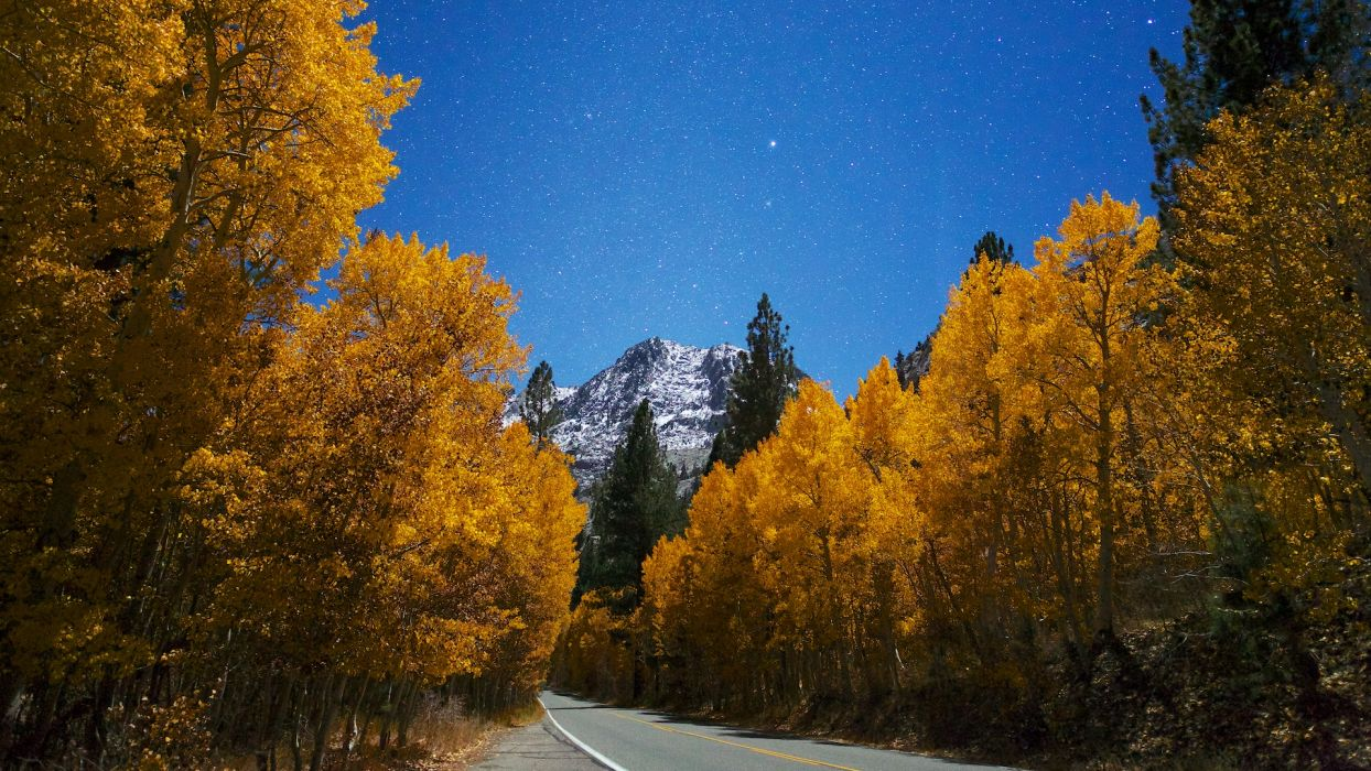 Forest Road Trees Stars Mountain Autumn wallpaper