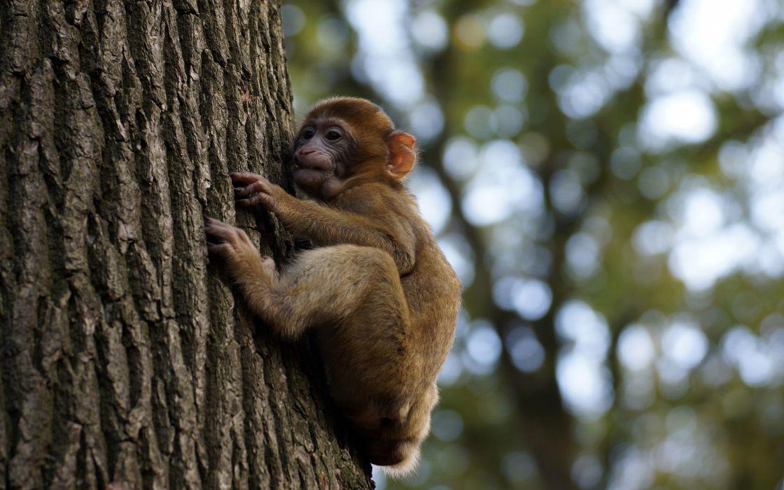 tree Monkey Baby        f wallpaper