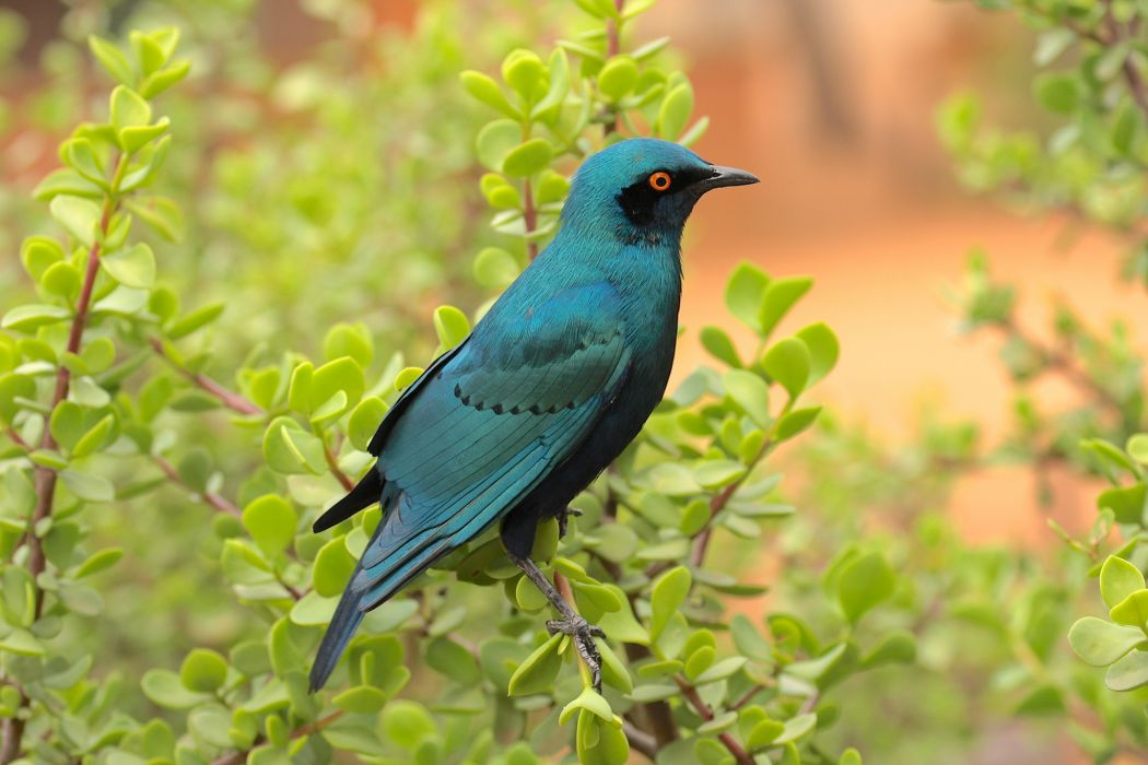 branches leaves bird wallpaper