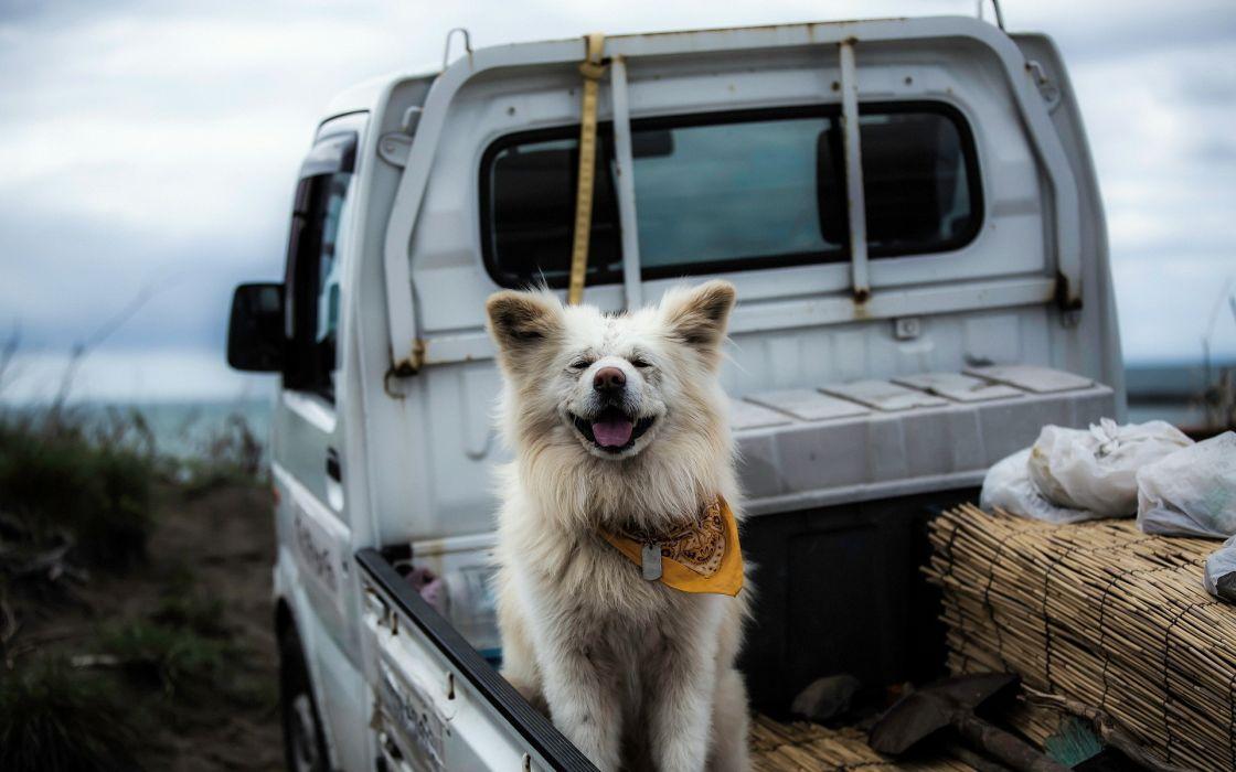 car friend dog wallpaper