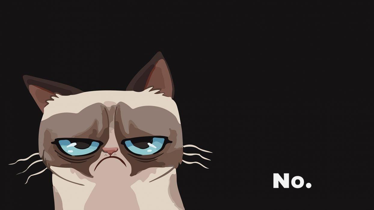 cat grumpy wallpaper