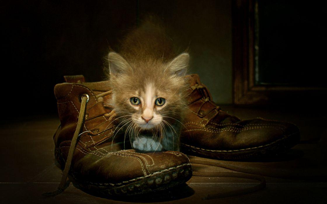Cats Boots Kitten wallpaper