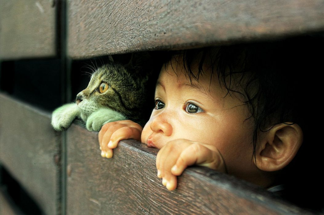 Cats Face Glance Fence Children Animals wallpaper