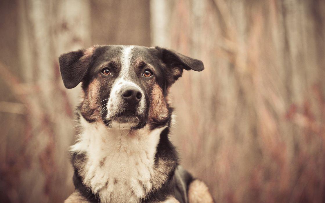 dog  g wallpaper