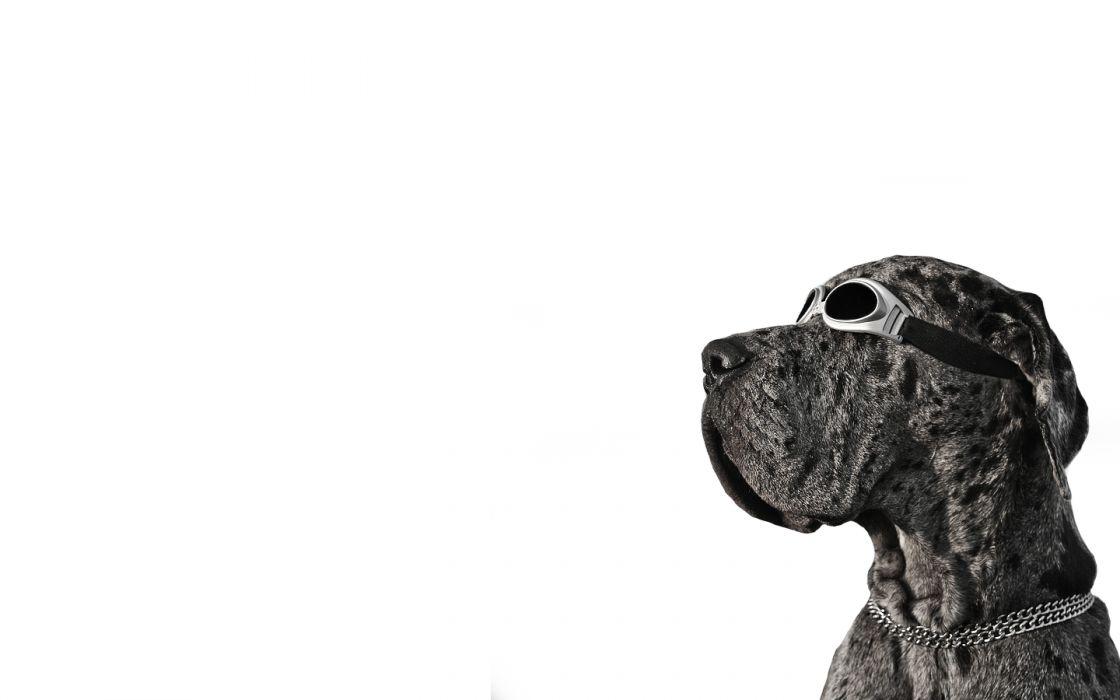 Dog Goggles wallpaper