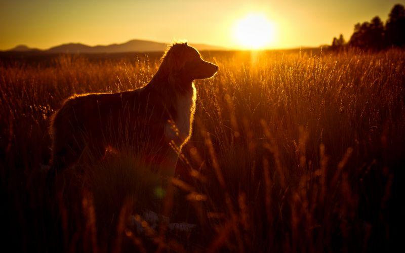 Собака на фоне заката  № 2038724 бесплатно