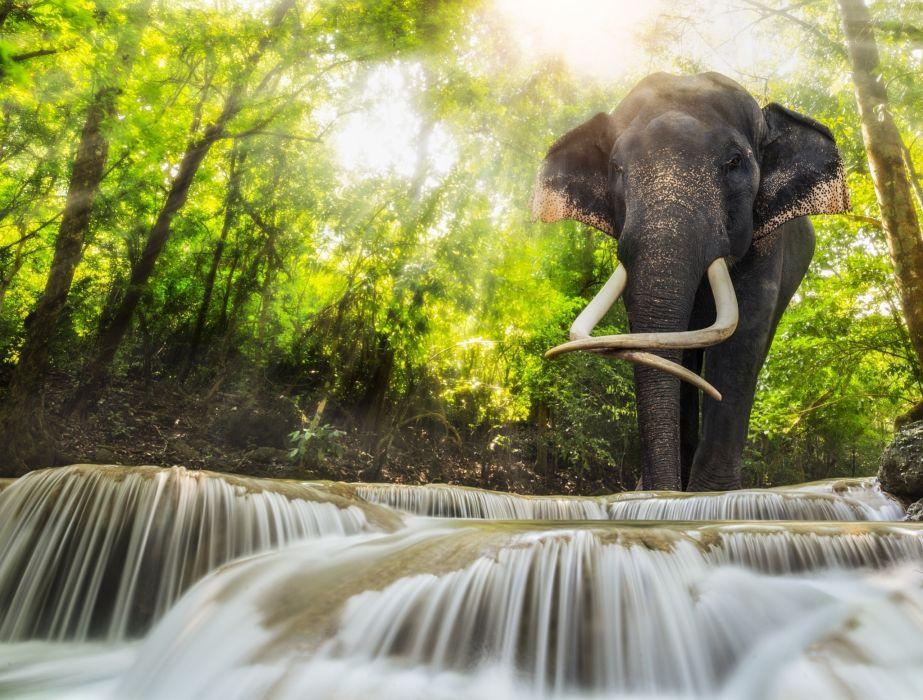 elephant forest river water sun light wallpaper